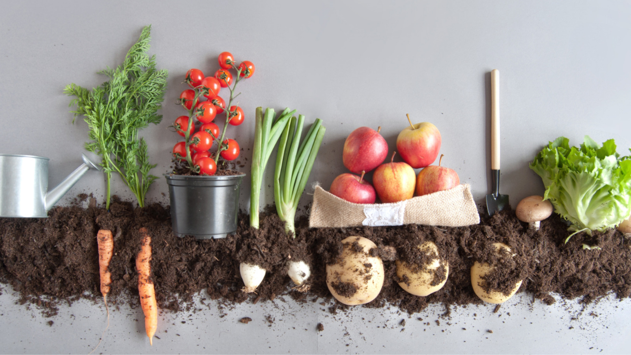 The Benefits of Growing Your Own Fruits and Vegetables